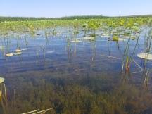 A Marsh